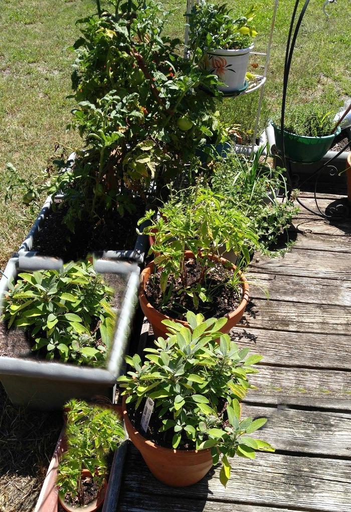 Garden on a deck