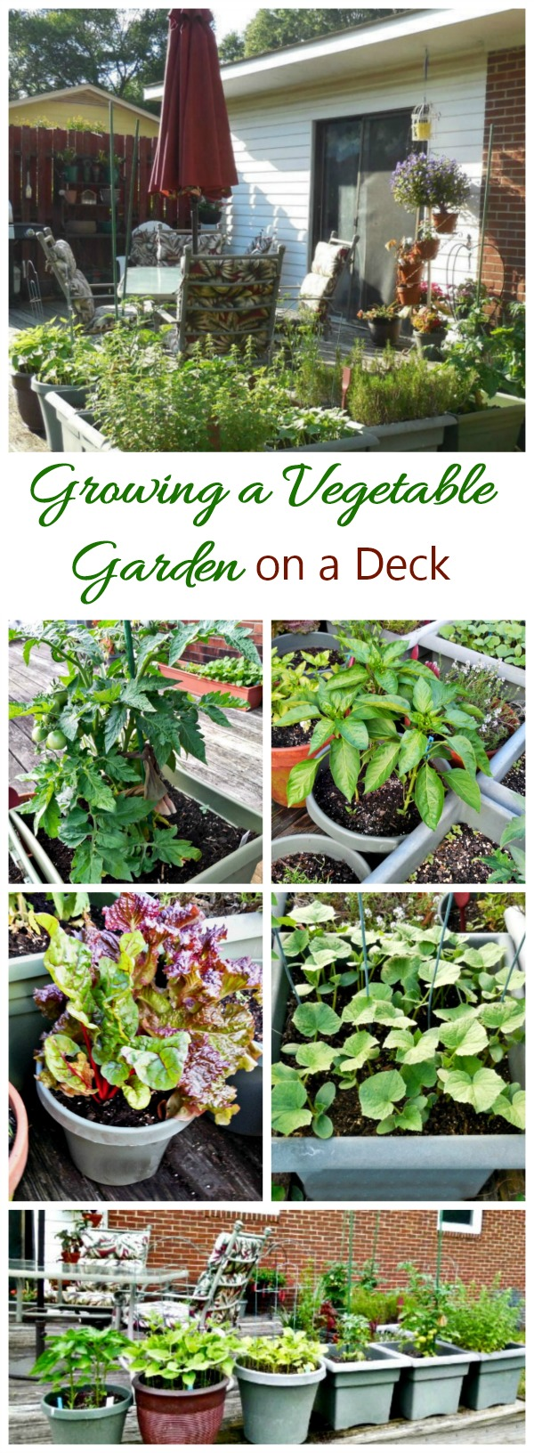 Growing a vegetable garden on a deck is a great way to go if you don't have much garden space