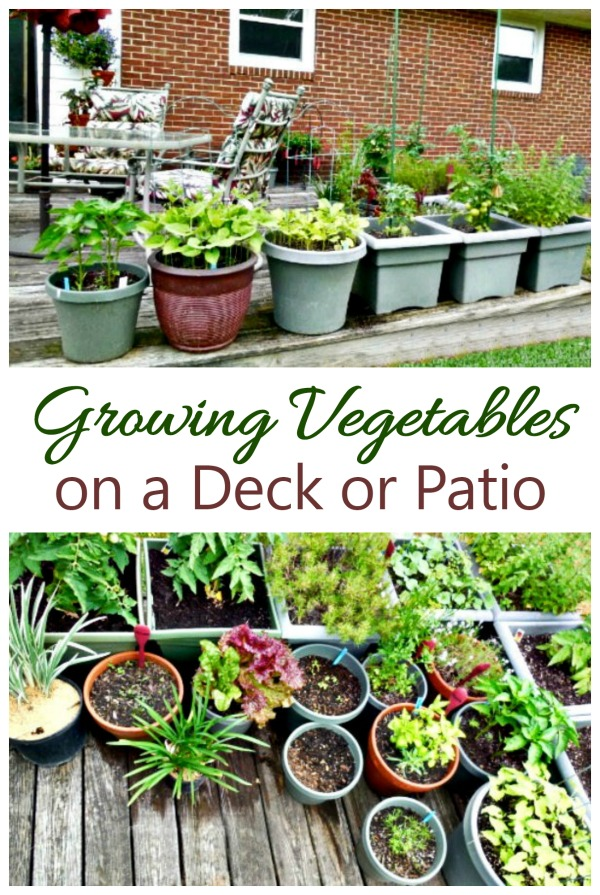 Vegetable Garden On A Deck Tips For Growing Vegetables