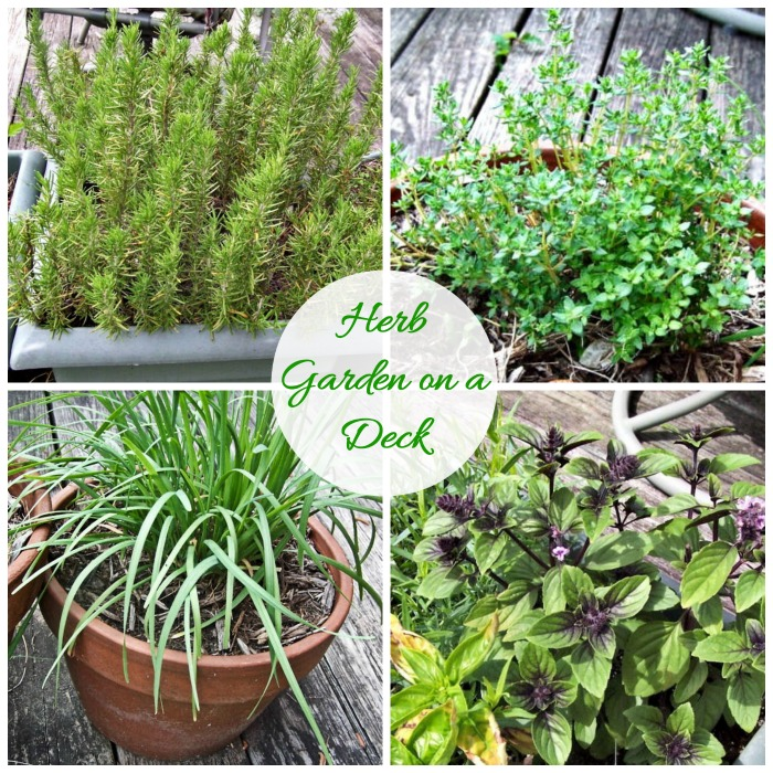 Beau Rosemary · Thyme · Chives Herb Garden On A Deck