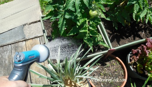 watering is a breeze with a flexogen hose