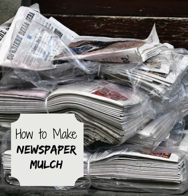 newspaper mulch controls weeds
