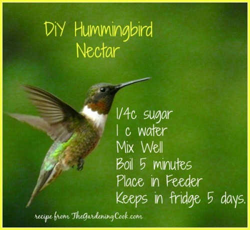 hummingbird nectar recipe