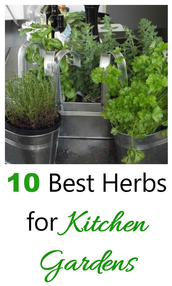 herbs in pots with words 10 best herbs for kitchen gardens.