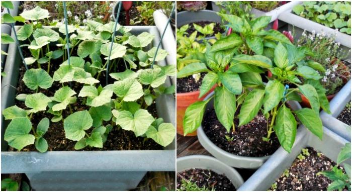 Use large pots for your deck garden design