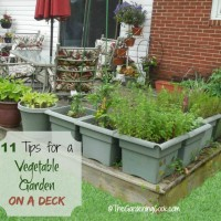 11 tips to grow a vegetable garden on a deck