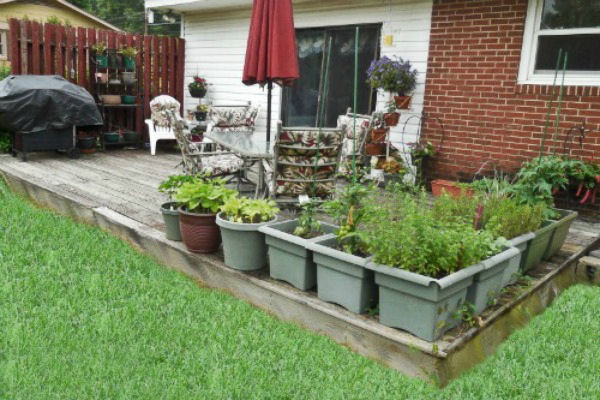 Growing vegetables on a patio
