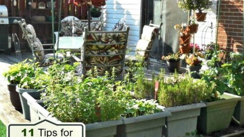 Vegetable Garden On A Deck Tips For Growing Vegetables On A Patio
