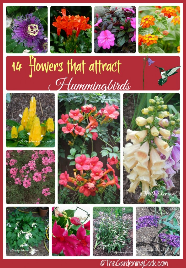 Plants these 14 flowers to attract hummingbirds to your garden.