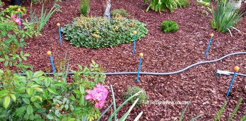 Hose guides in the garden