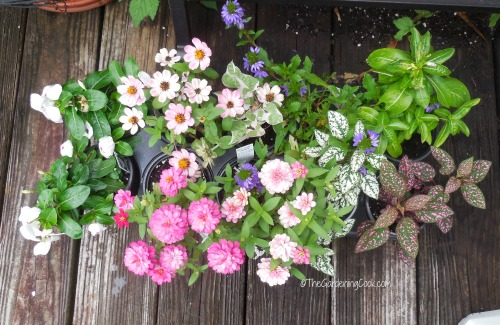 annuals for planters