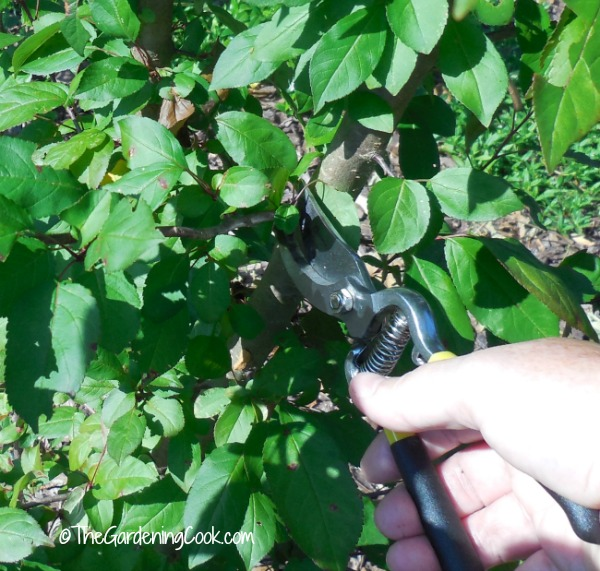 14 pruning tips