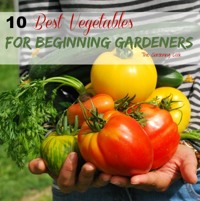 Make your gardening experience a success every time. The 10 best Vegetables for beginning gardeners to grow.