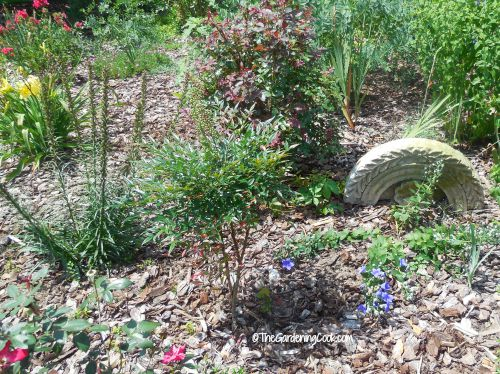Use stone or rock in cottage gardens