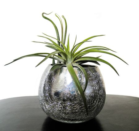 Air plants look great in a bowl.