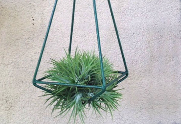 Air plant holder with good circulation