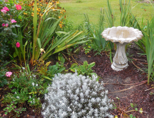 a bird bath adds curb appeal to a front garden bed