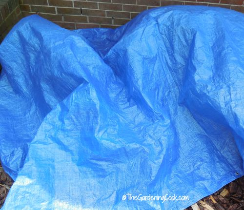 Use a tarp to protect your plants