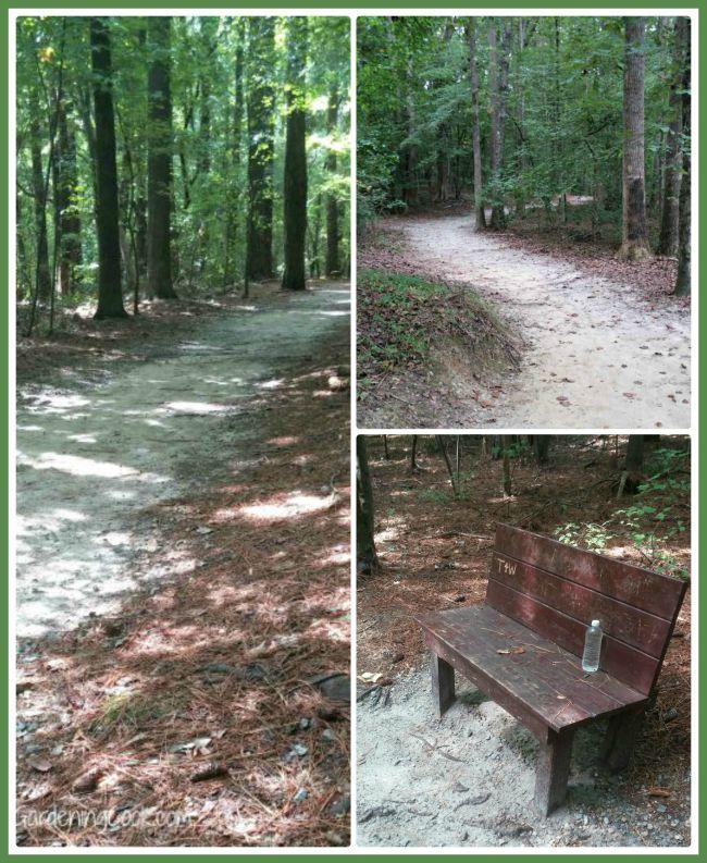 Lake Benson woodland trail