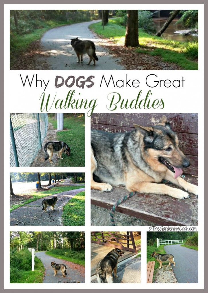 Need some exercise motivation? Try walking your Dog. Dogs make the best exercise buddies. Find out why in my lighthearted look at my best walking friend.