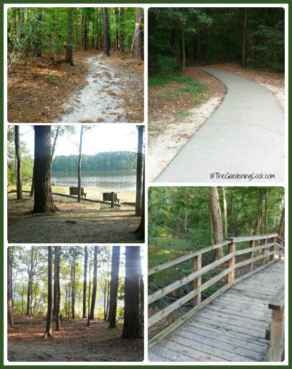 Lake Benson park