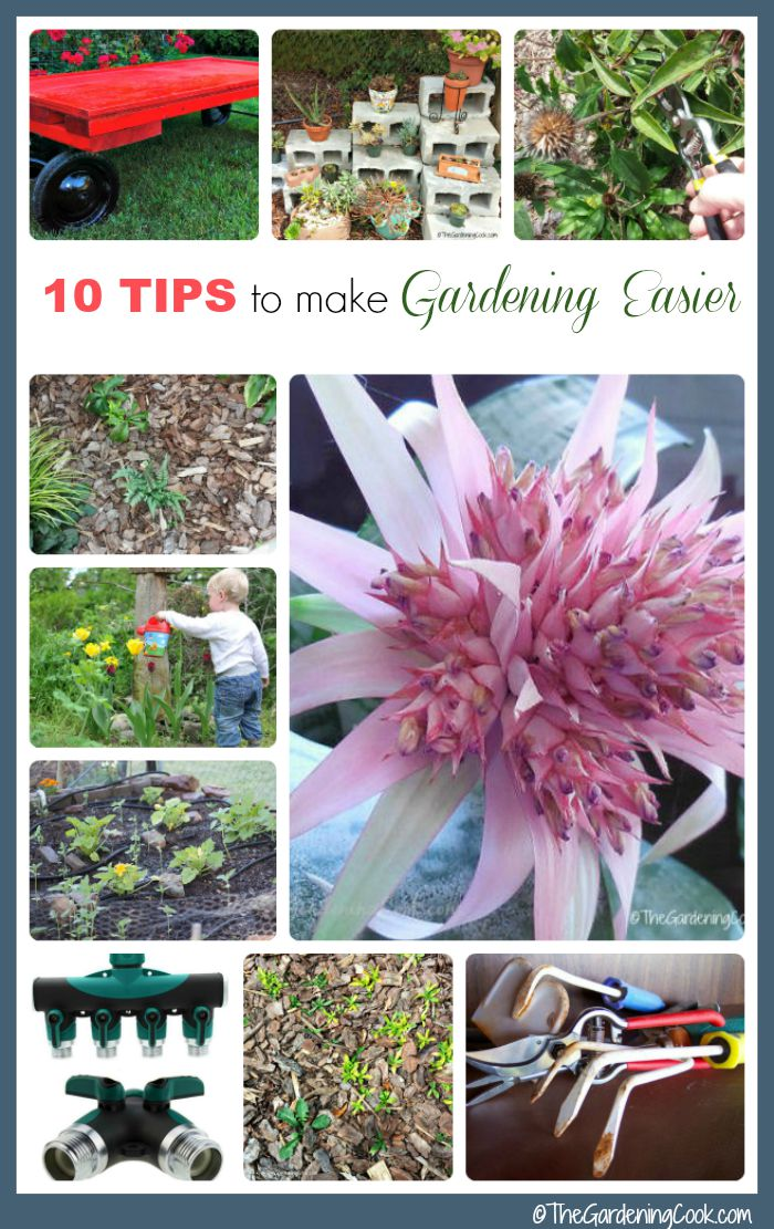 Follow these 10 tips to make gardening easier and you will have fun in the garden instead of being a slave to it. Gardening should not be a chore.