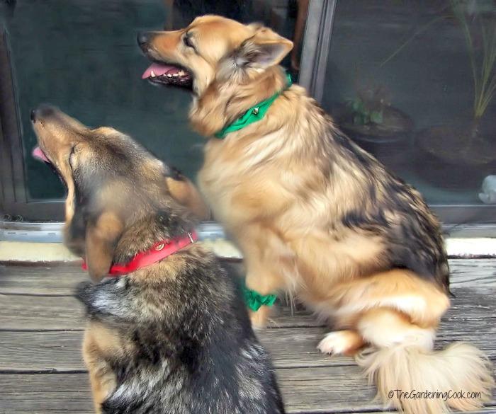 Ashleigh and Sassy on Christmas day