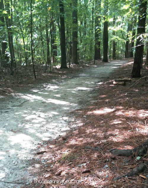 Lake Benson walking trail