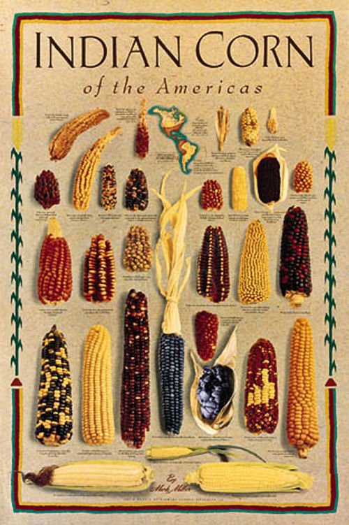 Indian Corn of the Americas.