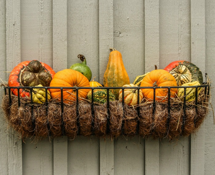 Ornamental gourds and pumpkins in a basket