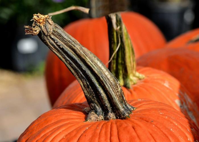 Choose a green stem for the freshest pumpkin