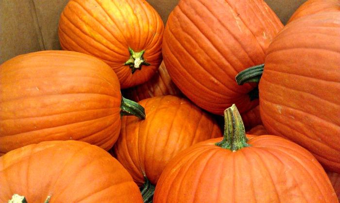 Pumpkins for carving