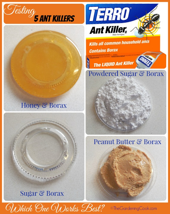 Testing Borax Ant Killers. Which was the winner? Find out at thegardeningcook.com