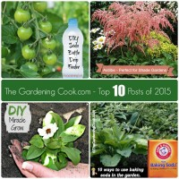 These articles are the most popular posts of 2105 on The Gardening Cook
