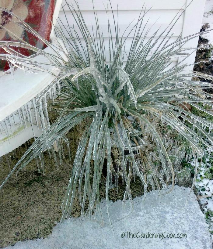 Frozen planter