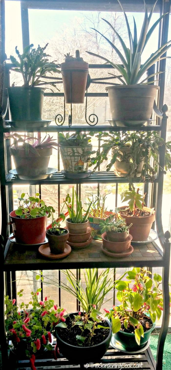 Indoor plants for winter