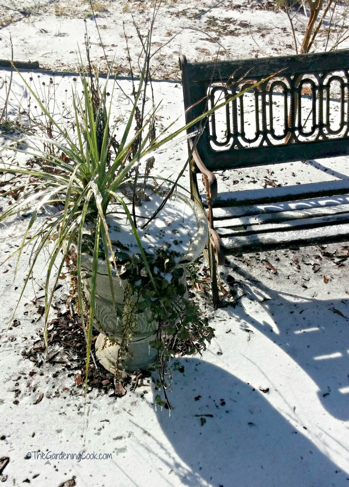 This frozen planter still shows signs of life