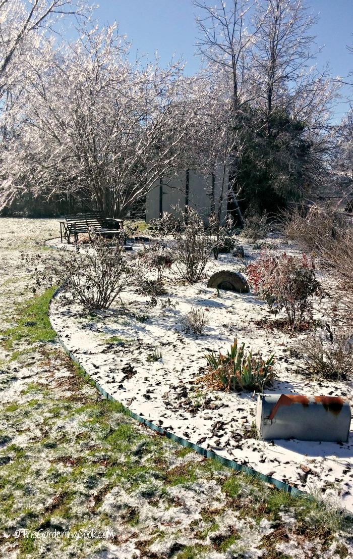 My side garden in North Carolina is a winter wonderland this week.