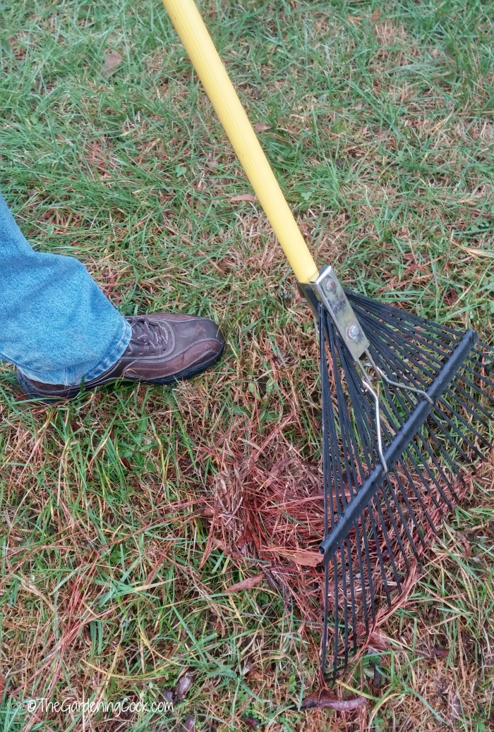 Rake the lawn to remove thatch
