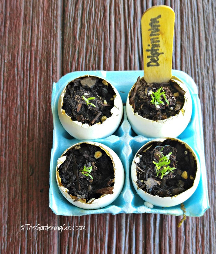 Egg shells make great seed starters