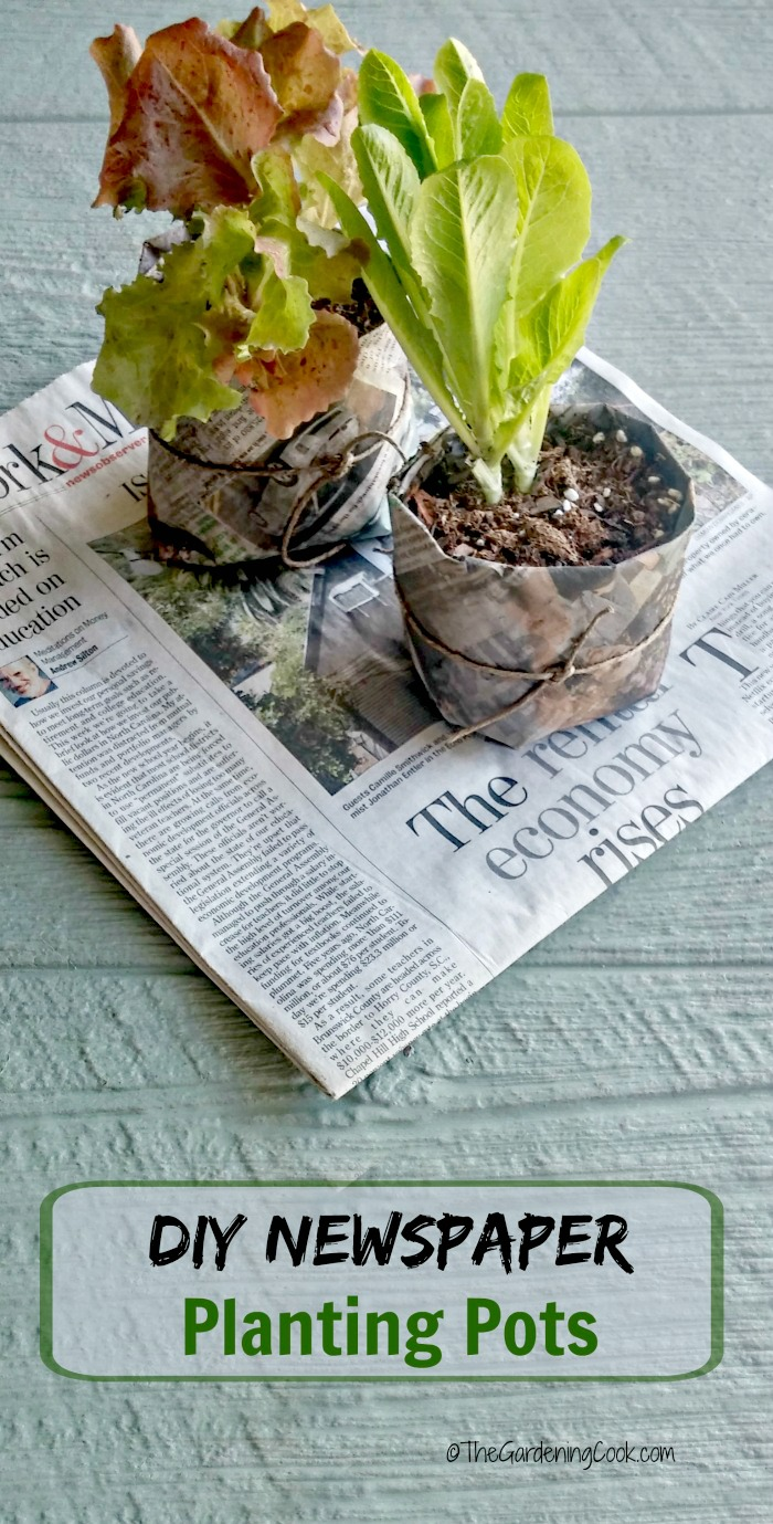 These DIY newspaper seed pots are an organic way to start your seeds. Plant them right into the garden when ready, paper pot and all. thegardeningcook.com
