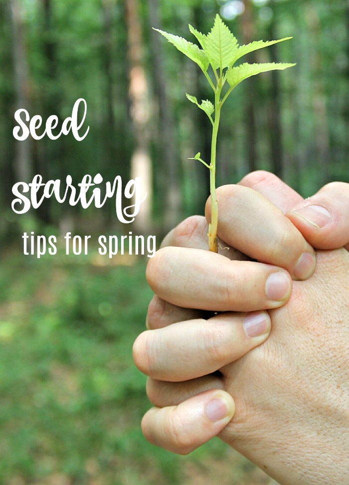 Seed starting tips for sping