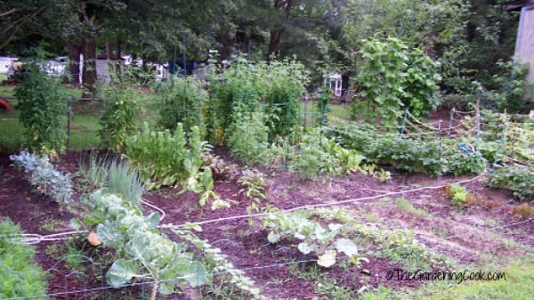 Plant your own vegetables