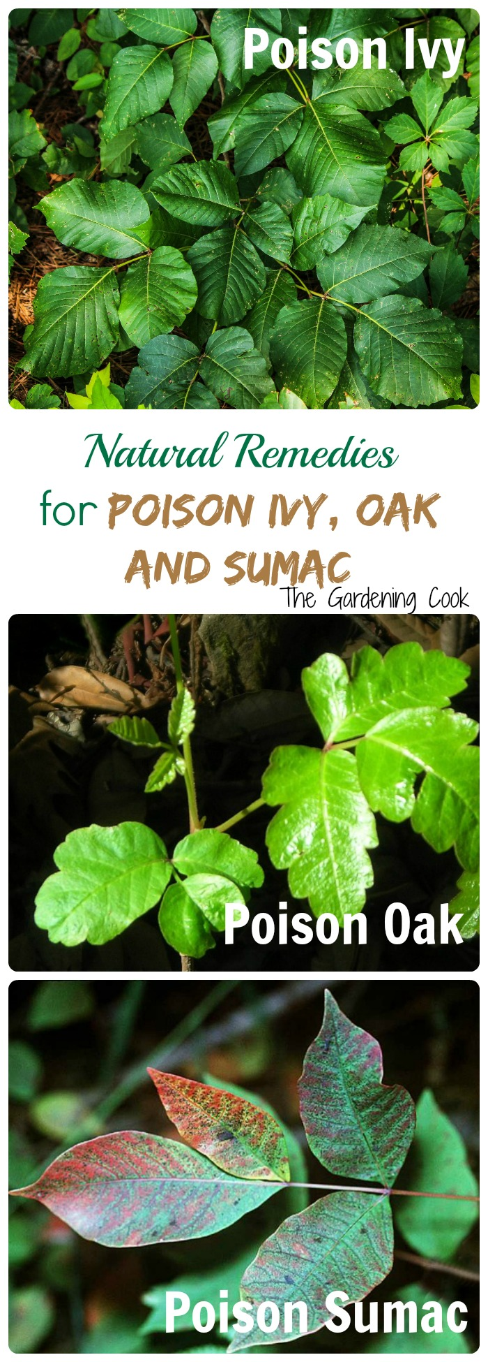Natural Remedy For Poison Ivy Sumac