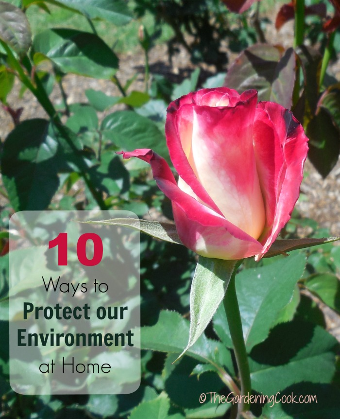 ways to protect our environment Protecting clean water for people and equip farmers with practical ways to keep harmful run-off out of our help our work to protect water and treat it like.