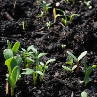 10 frugal seed starting pots