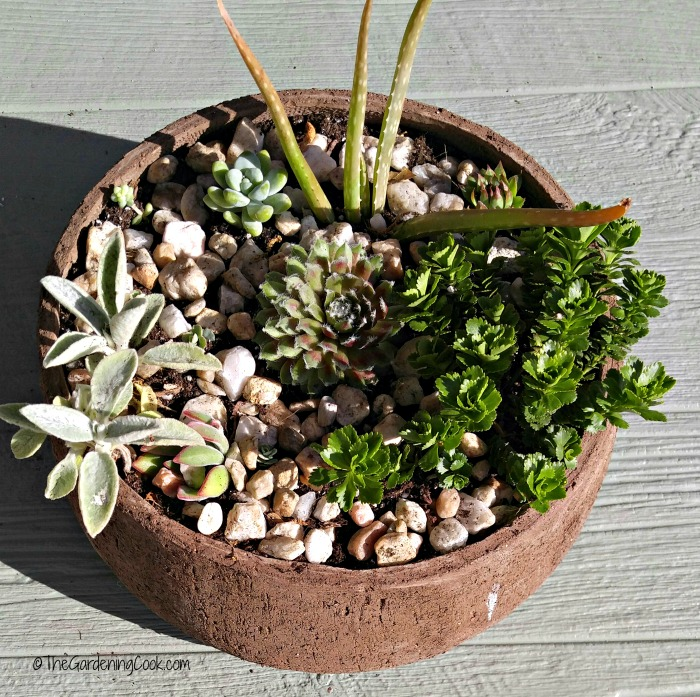 Round planter with succulents