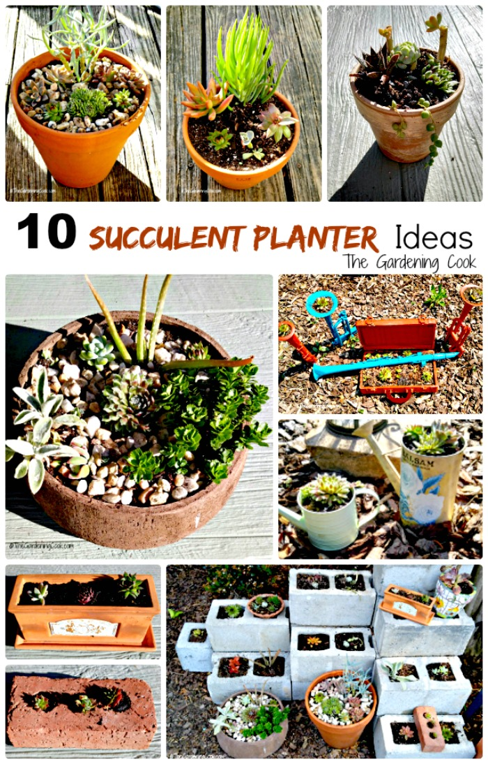 Succulents are the perfect choice for gardens that get a lot of heat in the summer time. These 10 rustic succulent planters range from bricks to watering cans and everything in between! the gardeningcook.com