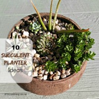 Succulent planter ideas