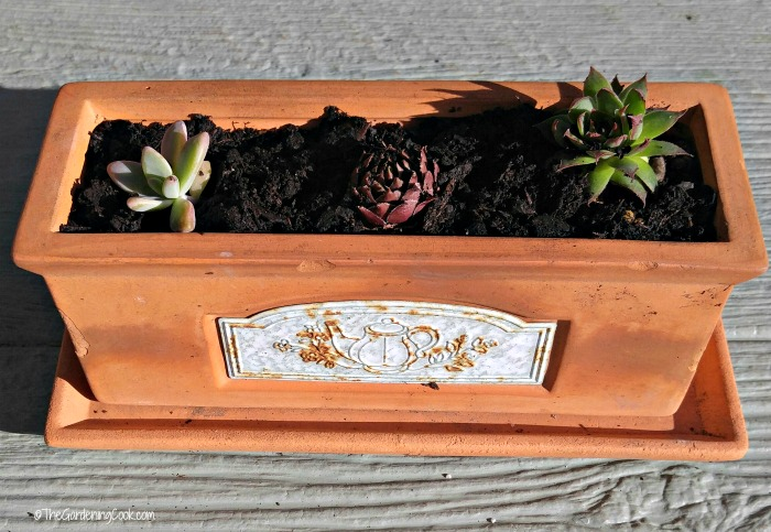 Dollar store planter with succulents